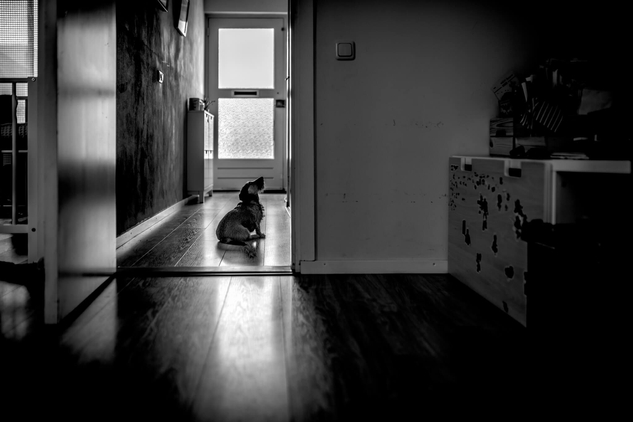 hondje geboortefotograaf