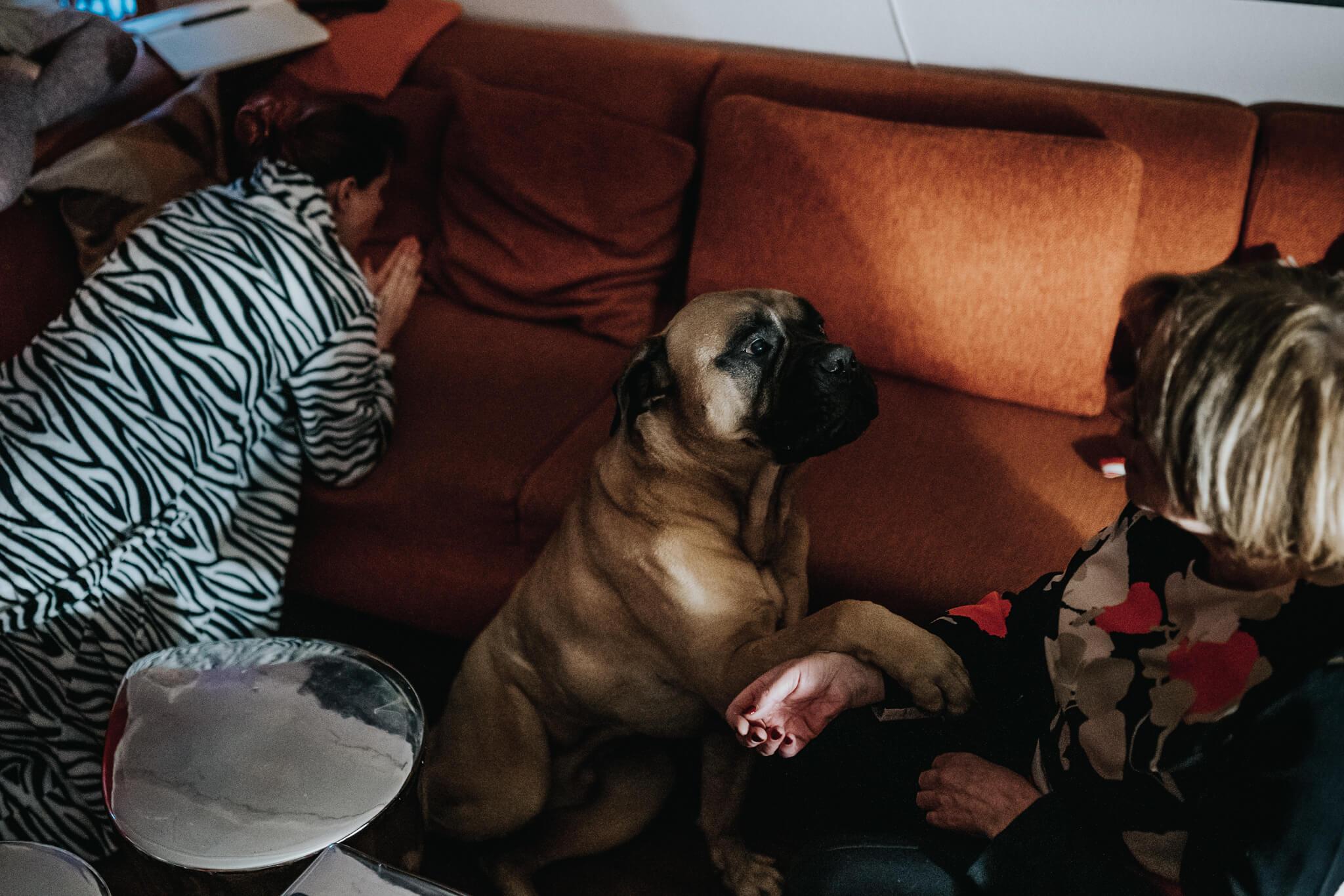thuisbevalling geboortefotografie hond bij bevalling