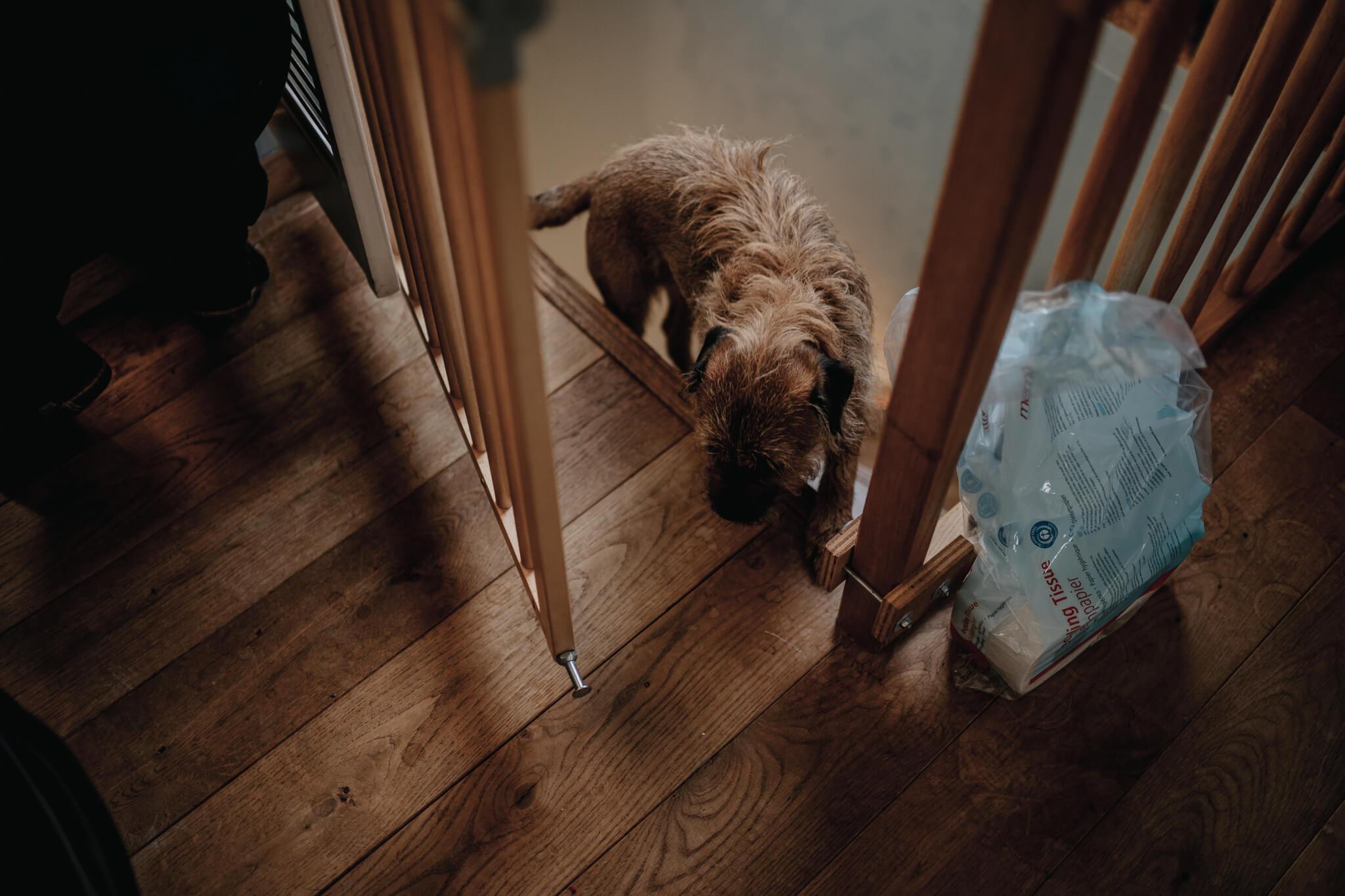 honden bij bevalling geboortefotografie Breda thuisgeboorte Birth Day geboortefotografie Cindy Willems